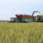 Raccolta_biomassa